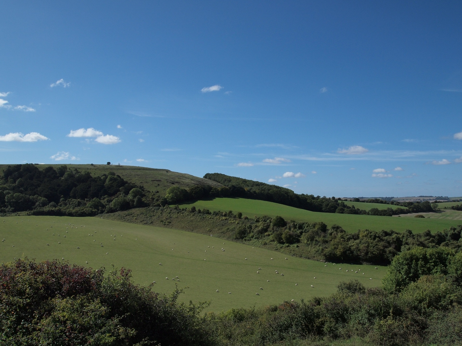 Old Winchester Hill – glorious walk in beautiful countryside.