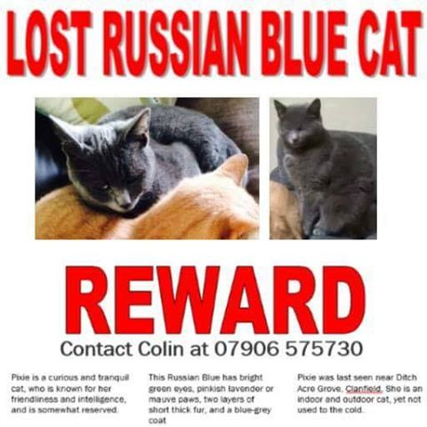 Reward for Lost Cat