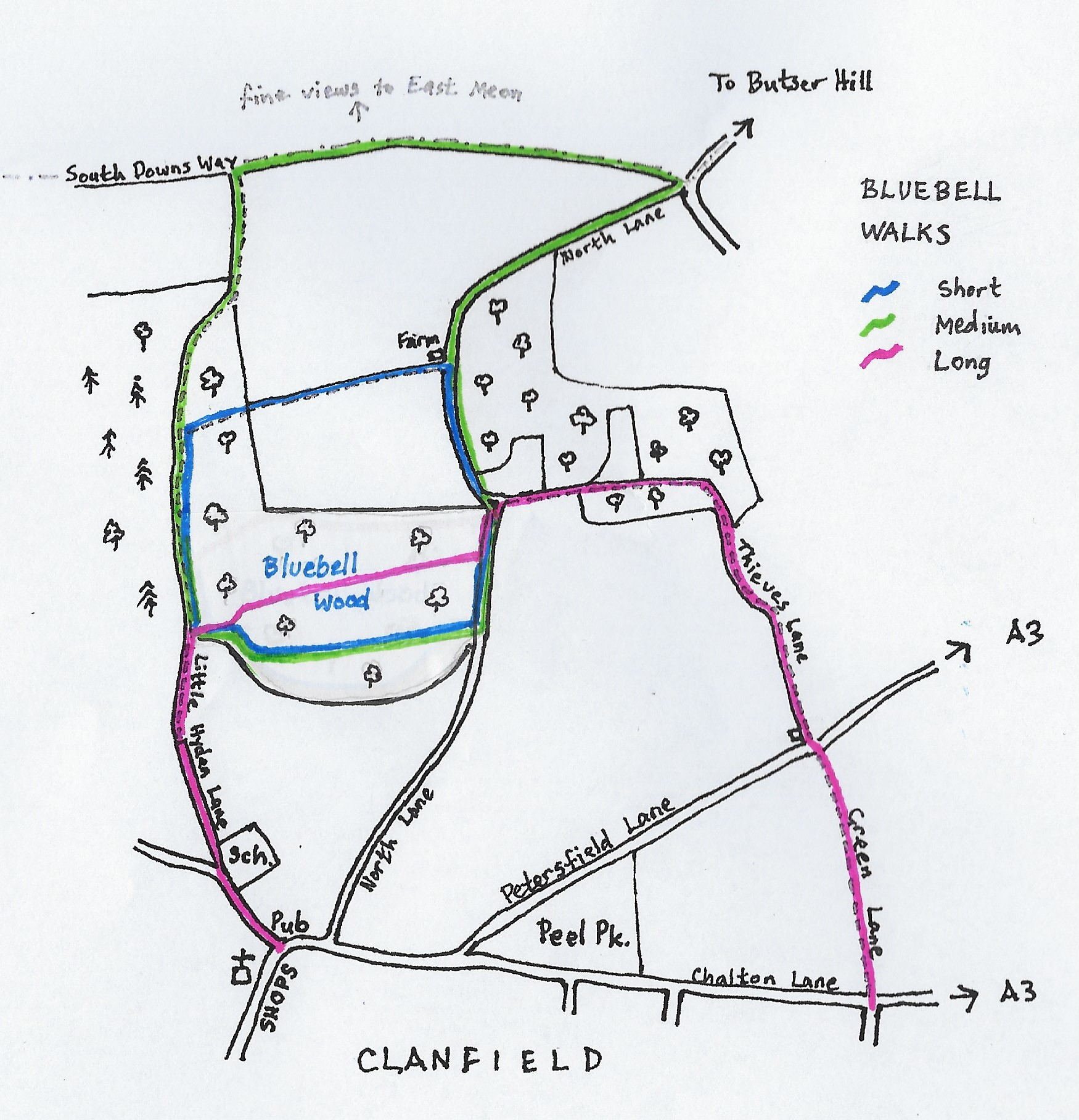 Walk of the Week - BLUEBELL WALKS