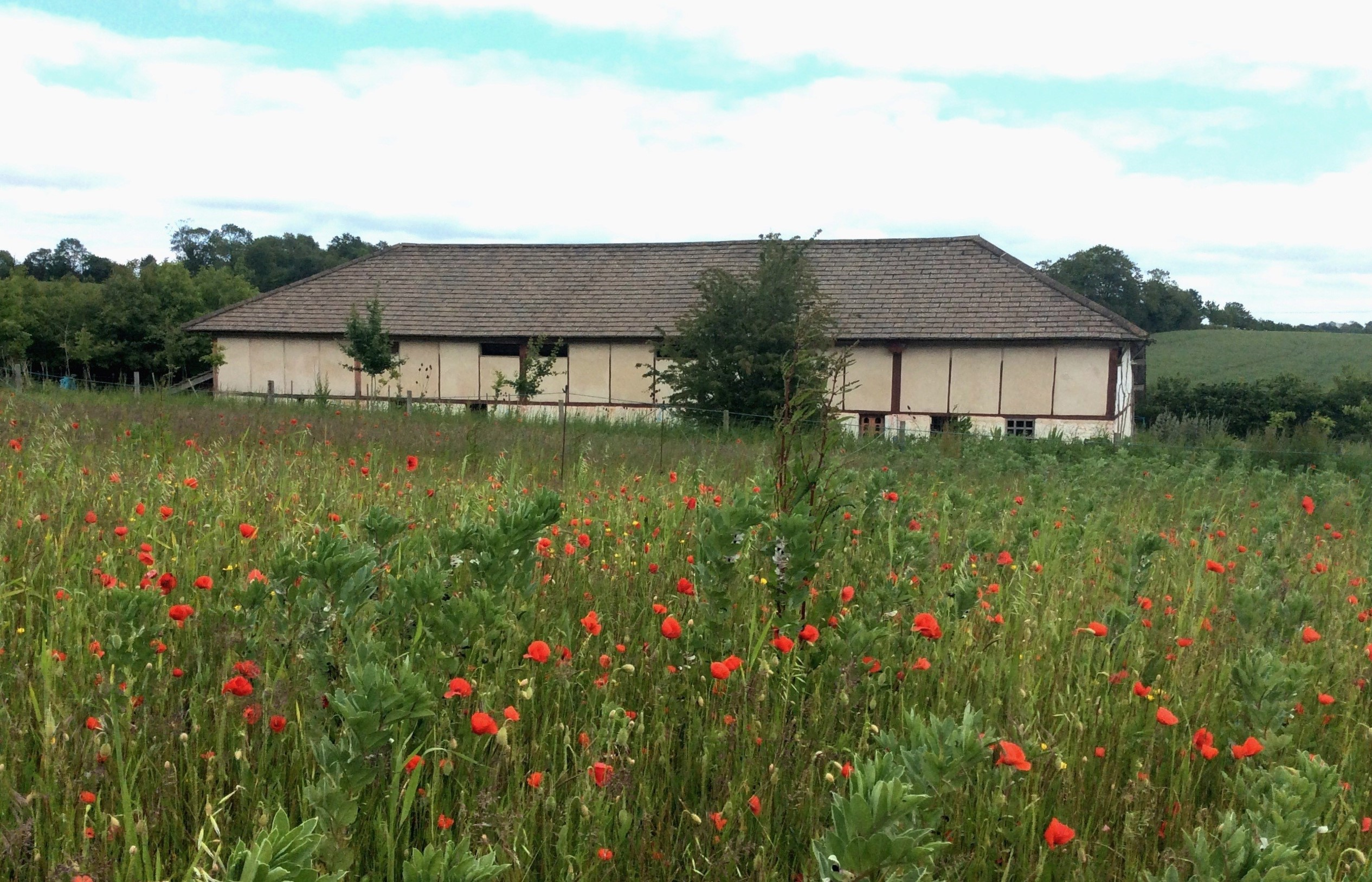 villa with poppies