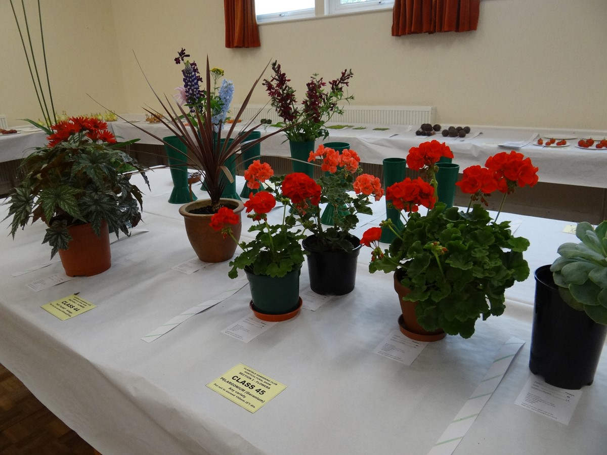 Annual Show - Flowers
